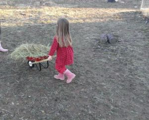 yes, that really is a kid sized radio flyer wheelbarrow.  Thanks Tractor Supply!